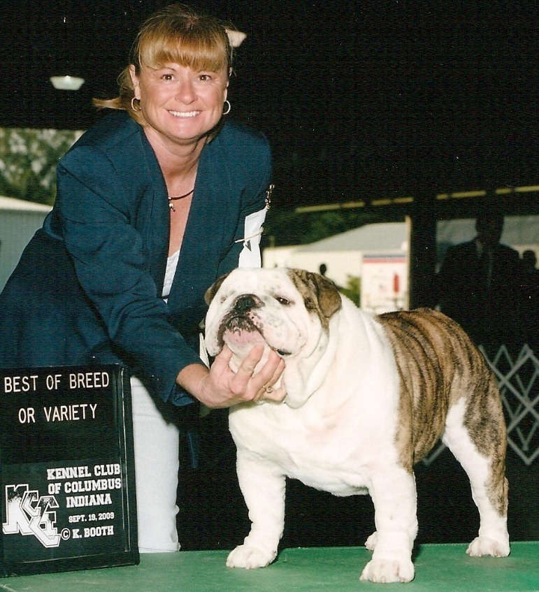 engelsk bulldog kennel