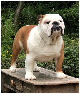 Ch Multi Ch Boy Fat Puppys Regal